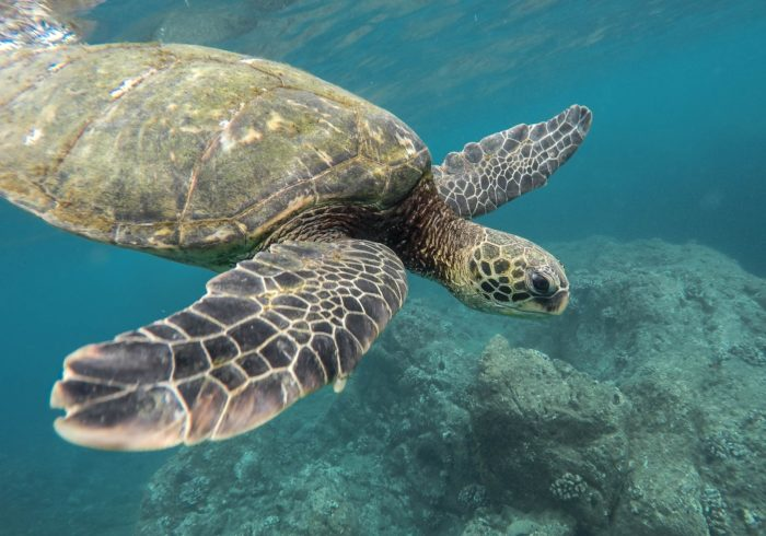 Keep an eye out for Turtles at Tupitipiti dive site