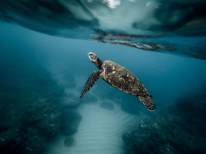 Keep an eye out for Turtles at Aito Dive Site
