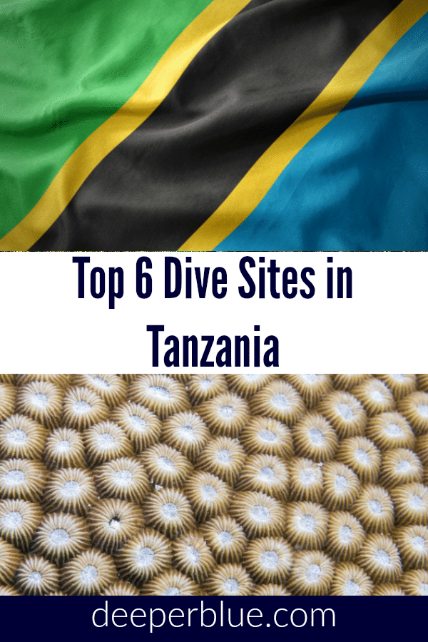 Top 6 Dive Sites In Tanzania