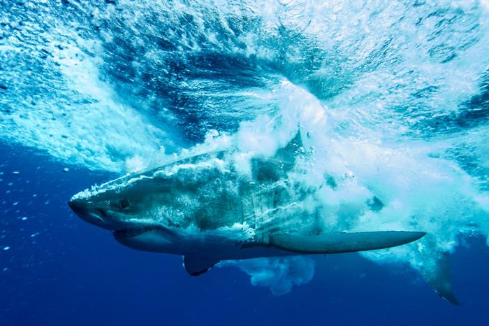 America's Shark Boat MV Horizon
