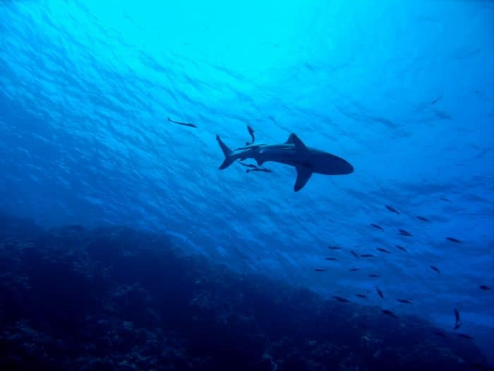 There are many shark sightings in Julian Rocks Marine Park