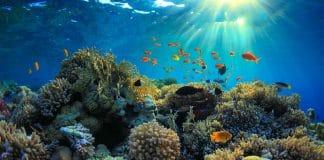 Underwater view of a reef