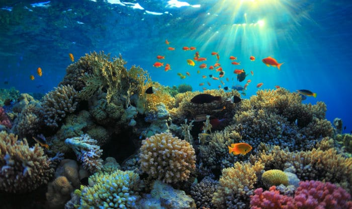 Keep corals intact by avoiding contact with them and keeping your bottom weight away from them