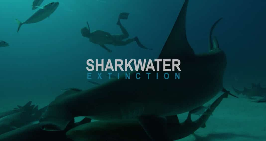 Rob Stewart's Final Film, 'Sharkwater Extinction,' Scheduled For Release In October 2018