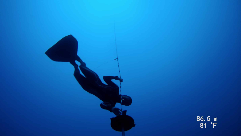 Shell at depth (photo courtesy of PFI)