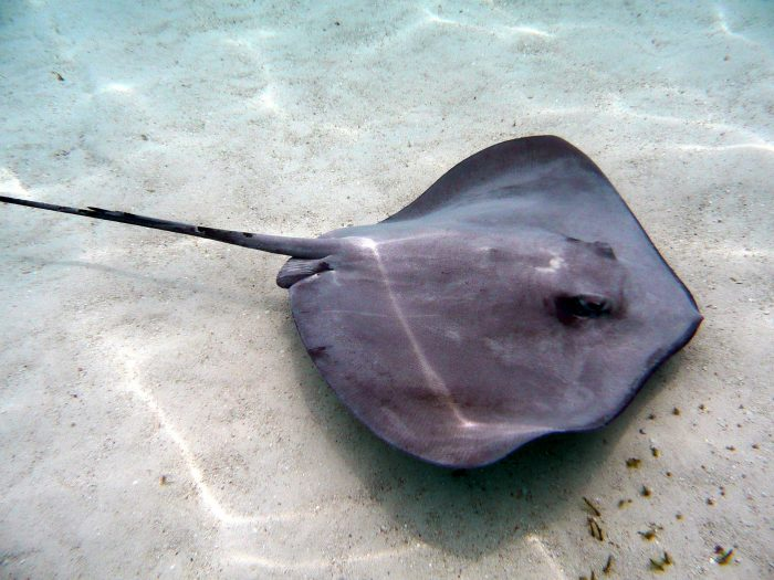 Keep an eye out for Giant Rays in the shallows at Fortesque Bay