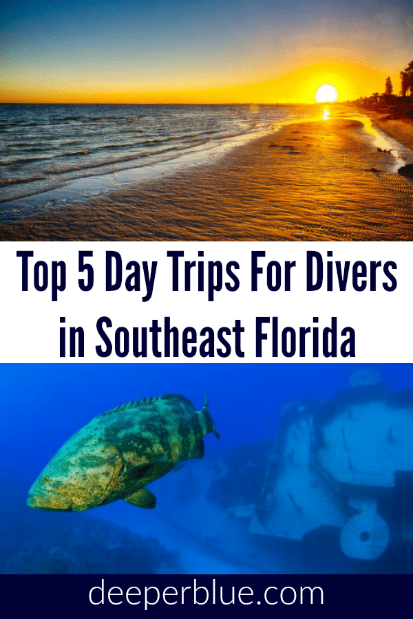 Top 5 Day Trips for Divers in Southeast Florida