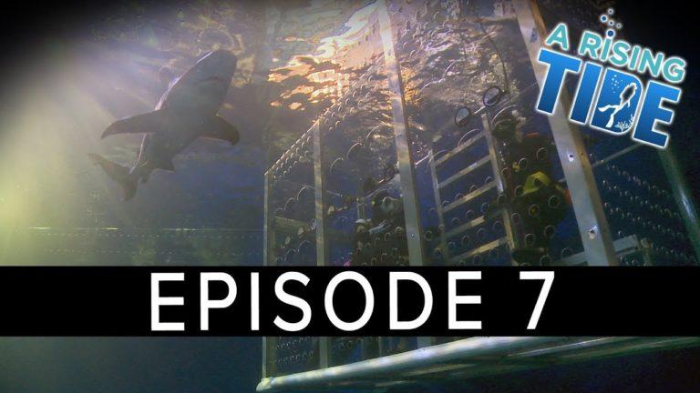 'A Rising Tide' Webseries – Episode 7 – Shark Tank Dive at Denver Aquarium