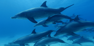 Global Media, Science, Philanthropy Coalition Launches OceanX