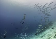 Freediving With Tradewinds Adventures