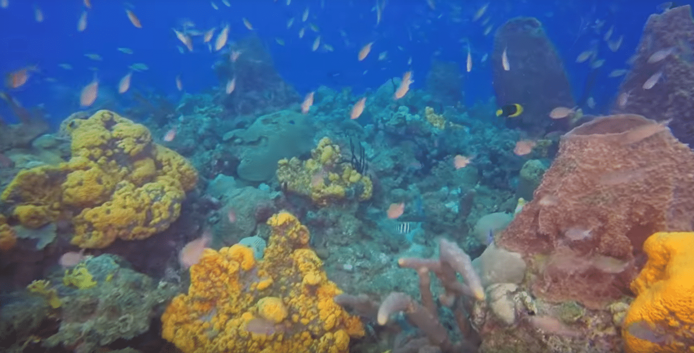Rediscover Dominica Diving