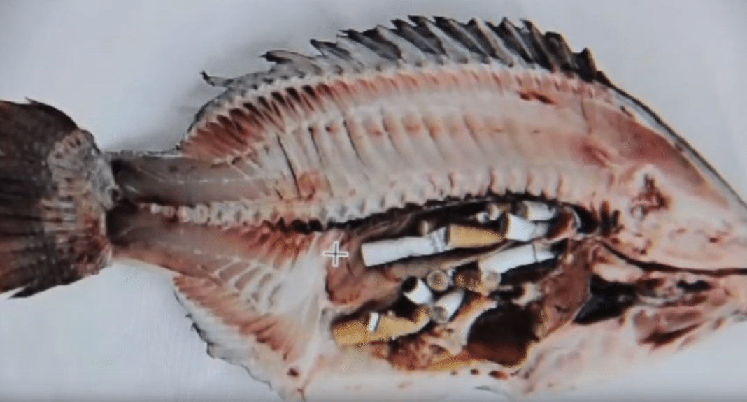 Project Launched To Combat Cigarette Butts In South Carolina Beaches