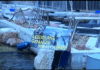 Animal Activists Protest At Spanish Dolphin Park