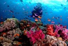 Fiji liveaboard diving