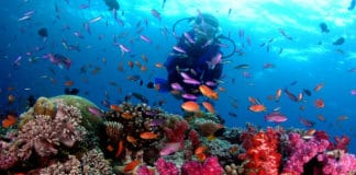 Fiji liveaboard diving