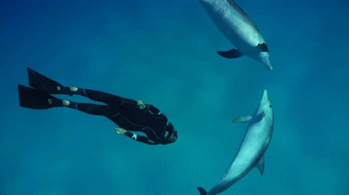 Freediver diving with dolphins
