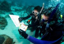 PADI Revises Its Project AWARE Specialty