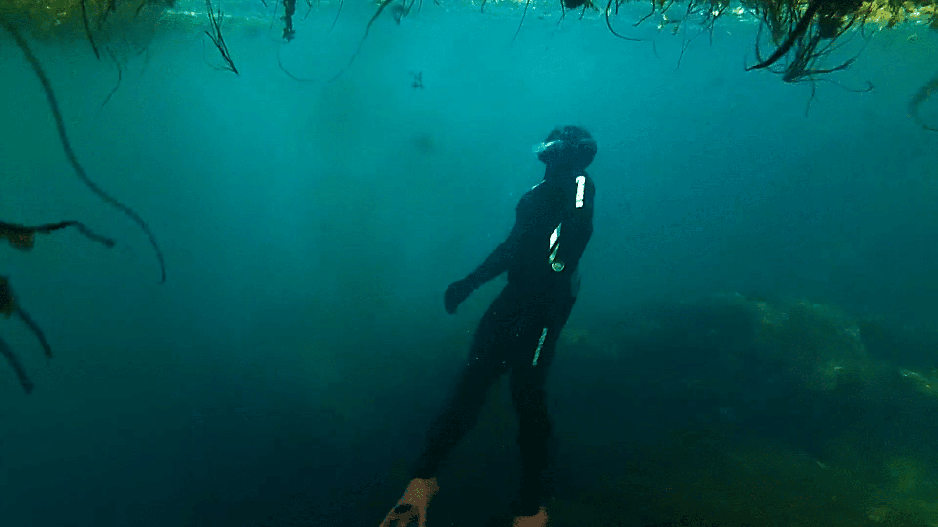 A new freediving club has formed in the Canadian province of Nova Scotia.