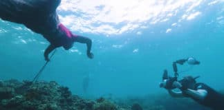 Atauro Dive Resort Featured In ScubaZoo Video