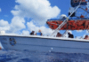 Dive Paradise Cozumel Partners With Local Nonprofit For 'Citizen Science'