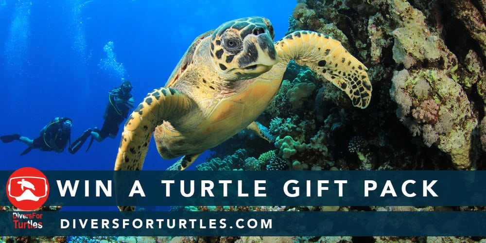 SEE Turtles: Saving Sea Turtles Through Education 3