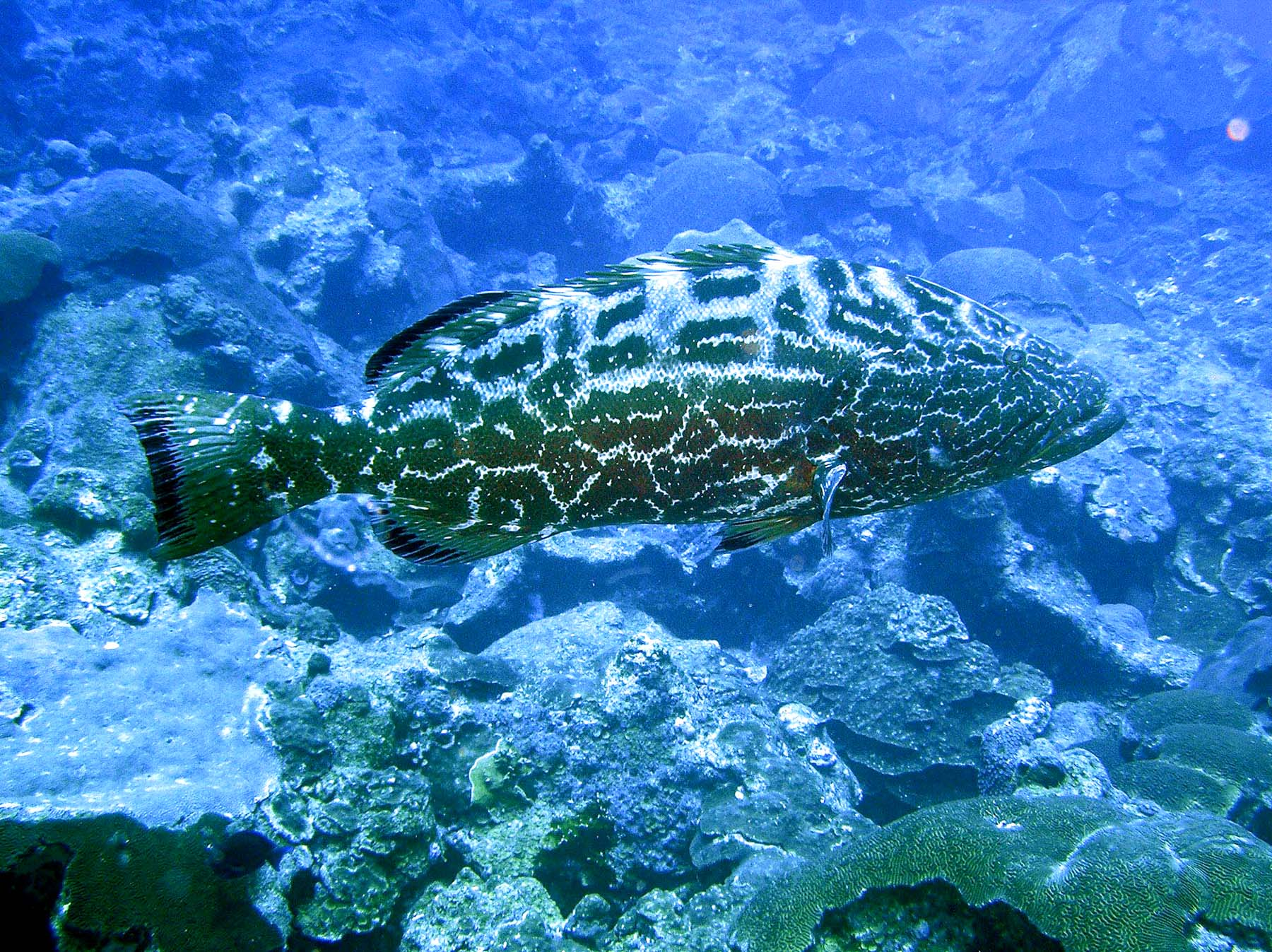 Grouper and butterfly fish are just a few of the species you will see in the sanctuary waters. (photo courtesy of NOAA)