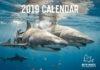 Shark photo highlighted in Bite-Back calendar