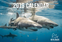 Shark photo highlighted in Bite-Back calendar