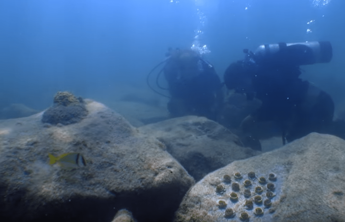 Scientist Figures Out How To Grow Corals Faster