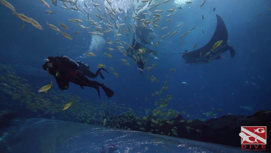 Diving at the Georgia Aquarium