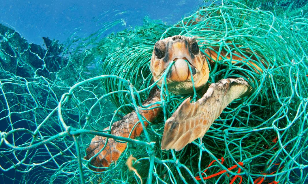 Turtle in Marine Debris