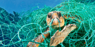 Turtle in Marine Debris