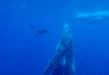 'Rapture Of Whales'