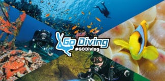 Go Diving Show Header