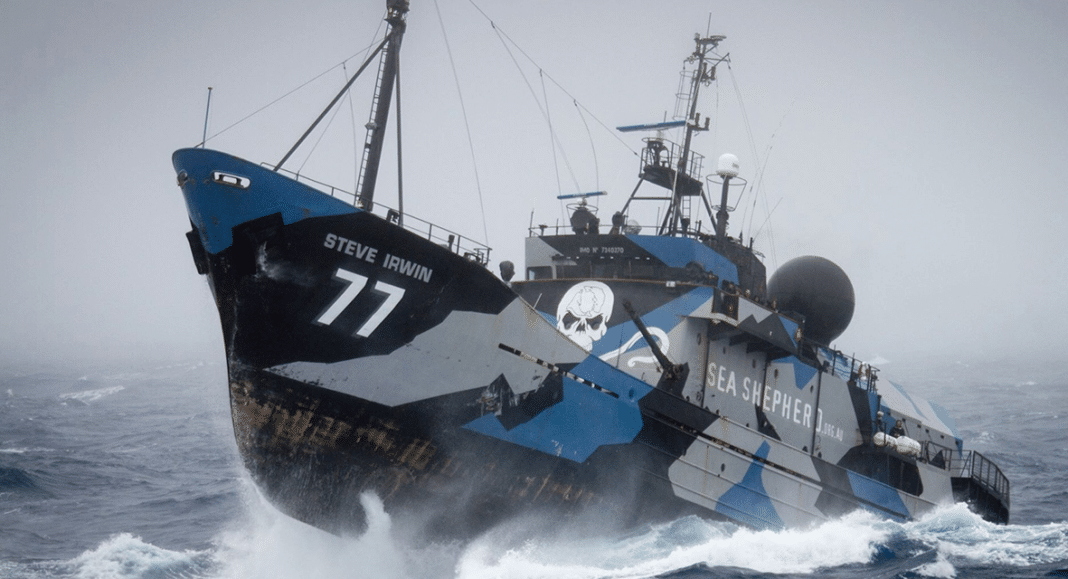 M/V Steve Irwin could become an artificial reef off Melbourne, Australia