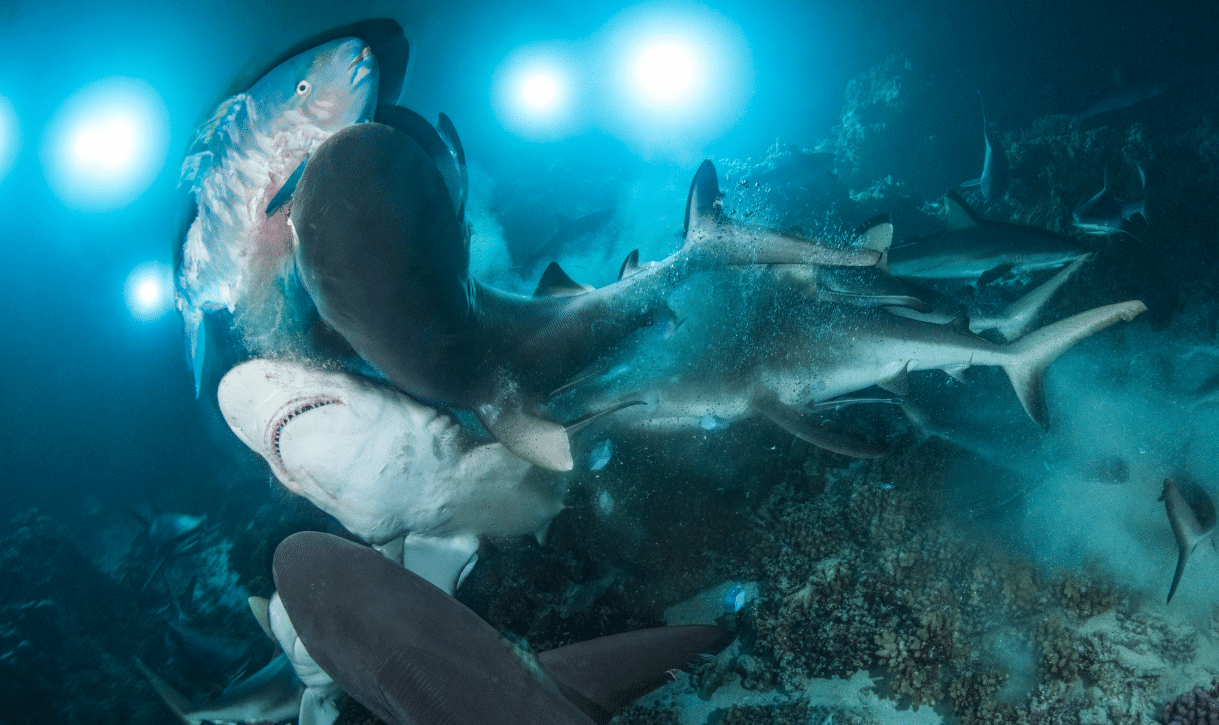 Underwater Photographer of The Year Winner © photographers-RIchard Barnden/UPY2019