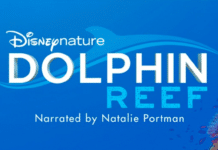 Disneynature's 'Dolphin Reef' Movie To Debut On Disney+