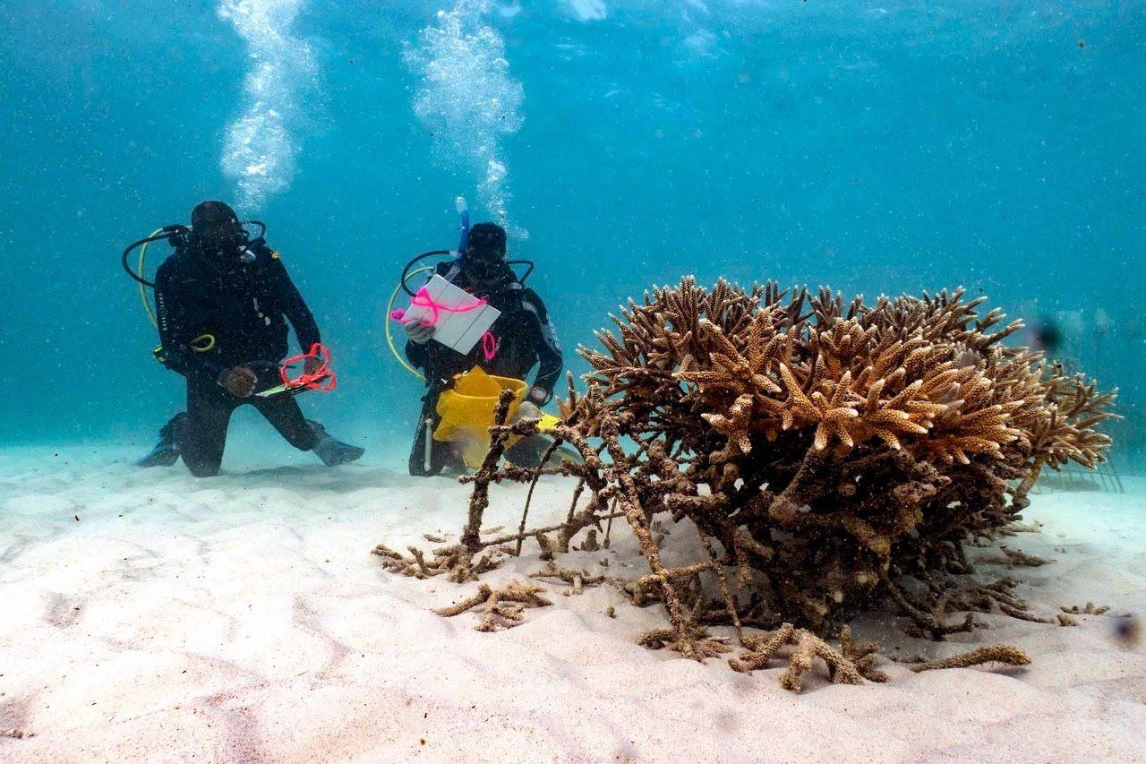 Bay Islands Reef Restoration