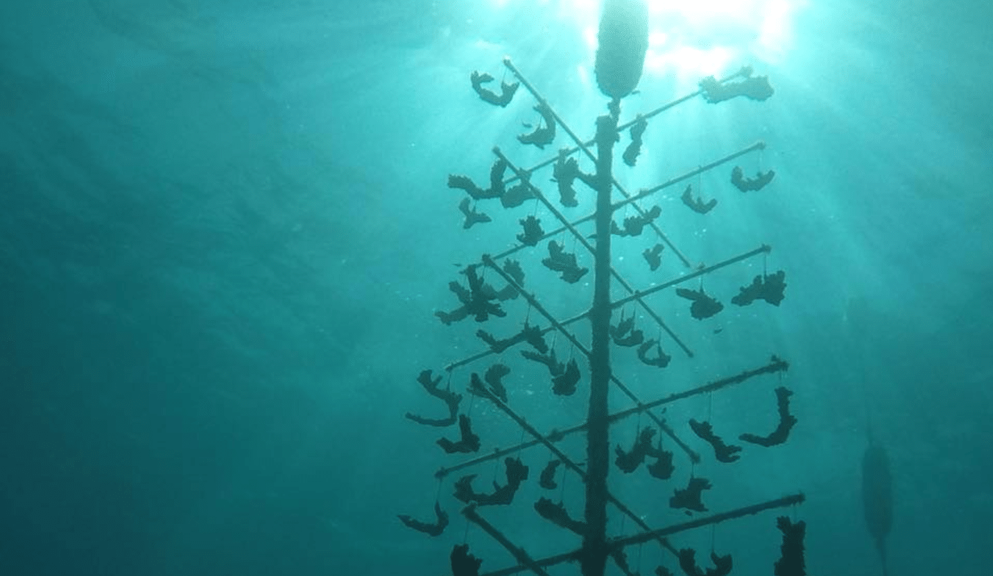 Coral Restoration Programs In Roatan Expanded