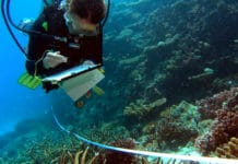 Reef Check Diver collects data on coral bleaching and other ecosystem health indicators along a transect.