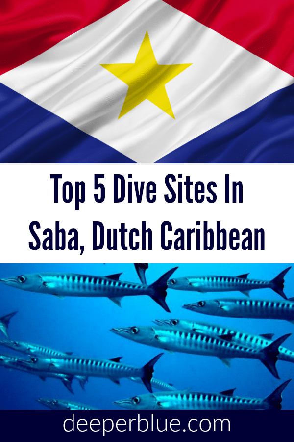 Top 5 Dive Sites In Saba, Dutch Caribbean