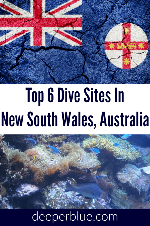 Top 6 Dive Sites In New South Wales, Australia