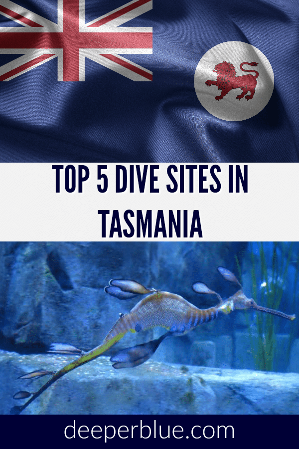 Top 5 Dive Sites in Tasmania