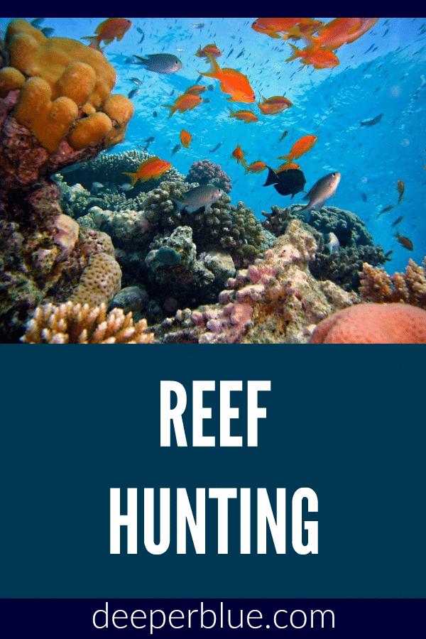 Reef Hunting