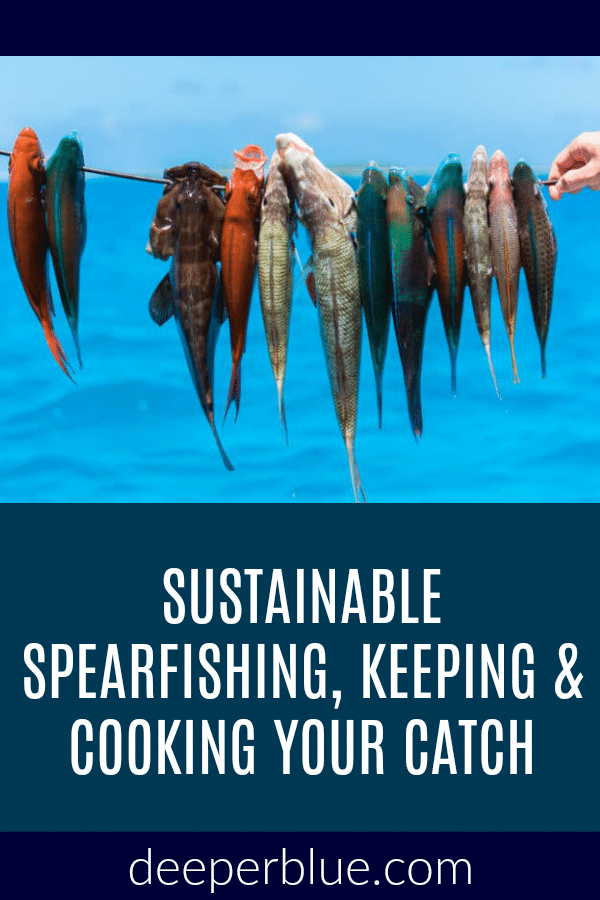Sustainable Spearfishing, Keeping & Cooking Your Catch