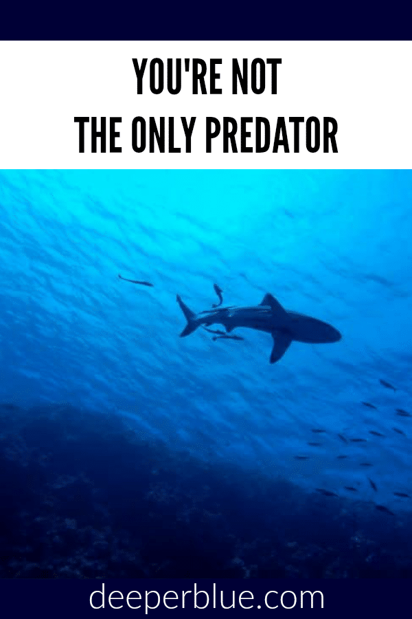 You're Not the Only Predator