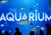 Check Out Animal Planet's New TV Series 'The Aquarium'