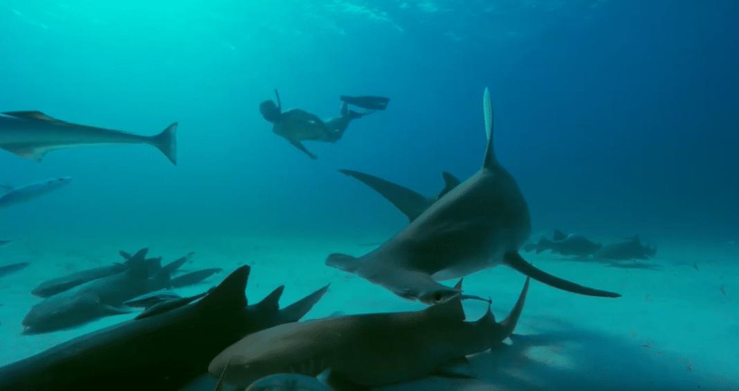 Canada Bans Shark Fin Imports