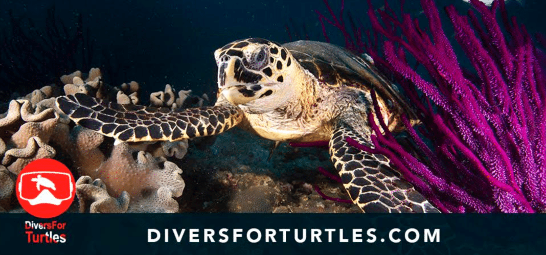 Divers For Turtles Launches Sea Turtle Diver Pledge