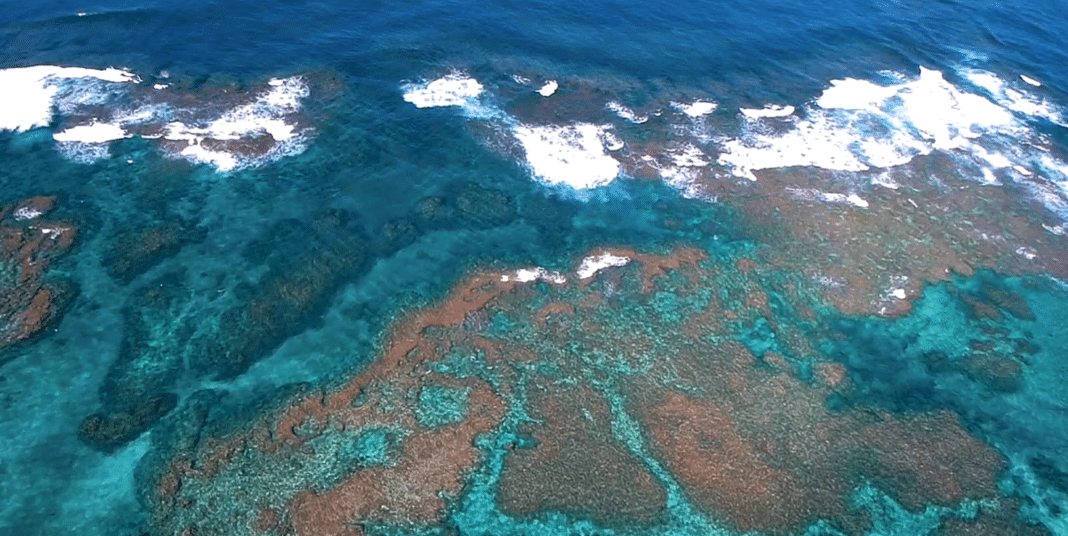 Video Highlighting The Tragedy Of Marine Debris In Hawaii Released 2